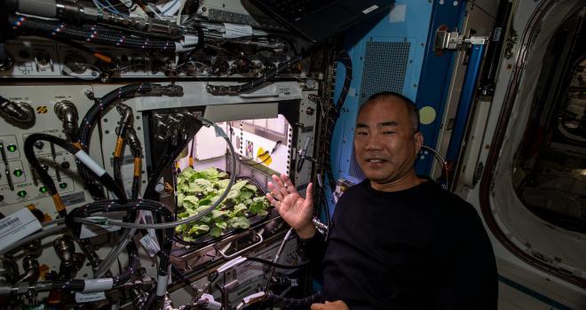 El astronauta Soichi Noguchi con plantas de rábano que crecen dentro de la estación espacial
