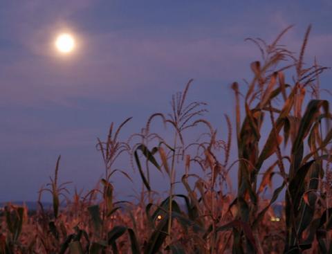 Super Harvest Moon (moonrise, 550px)