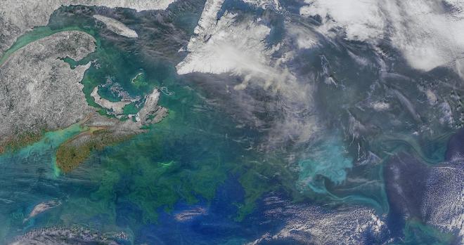 : Diferentes comunidades de fitoplancton florecen alrededor de las provincias marítimas de Canadá y en el noroeste del océano Atlántico.