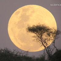 Super Full Moon (moon illusion, 200px)