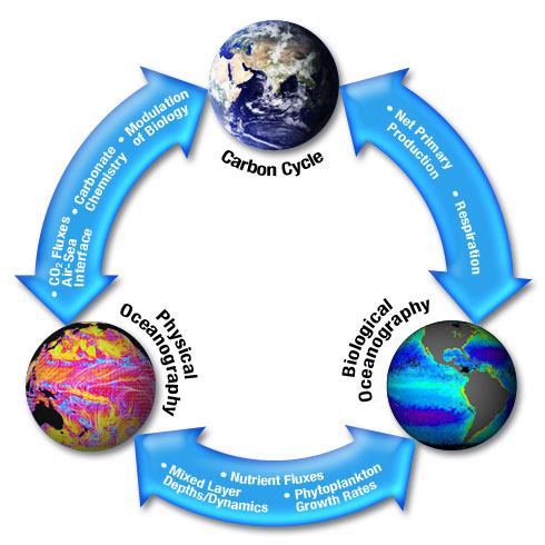 Carbon cycle science mission directorate carbon pyramid this diagram ccuart
