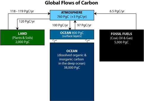 Carbon cycle science mission directorate global flows of carbon ccuart Images