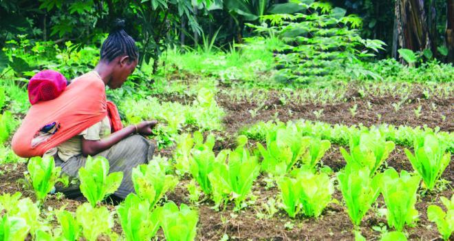 Photo of man in vegetable garden