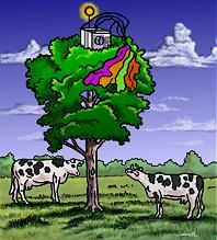 The payload atop a tree in a Georgia cow pasture, by Duane Hilton
