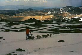 Sled dogs cross the White Mountains in May, 1999