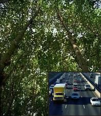 forest being eclipsed by a highway