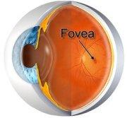 Cold and Spellbinding (fovea)
