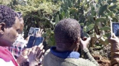 Photo of Kenyan citizens using smartphone app in the field