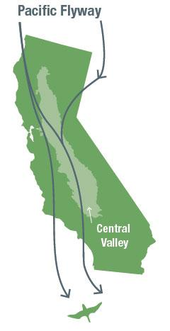 Map of Pacific Flyway, illustrating bird migration pathways over California