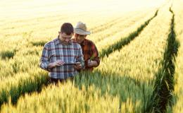 Two farmers standing a field looking at mobile device