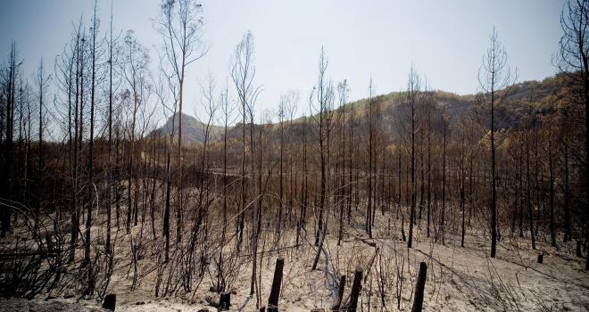 Photo of bare trees in forest after fire