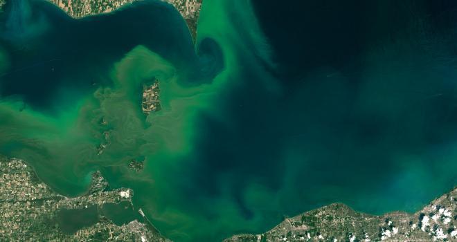 Satellite image of algal blooms