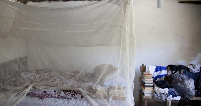 Photo of mosquito net covering bed