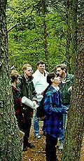 woods.tnl.jpg