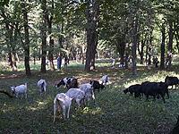 goats.tnl.jpg