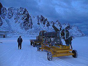 black brant in the snow
