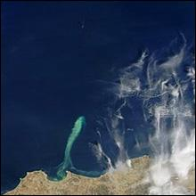 MODIS - phytoplankton off of Algiers