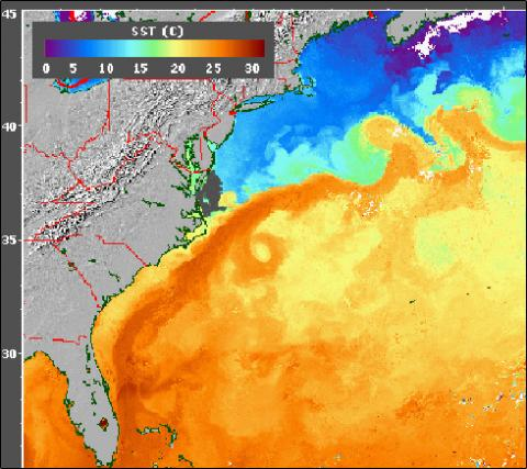 AVHRR - SST of the Gulf Stream