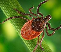 Tracking Ticks via Satellite (tick, 200px)