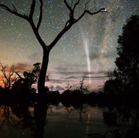Hot Comet (beauty shot, 558px)