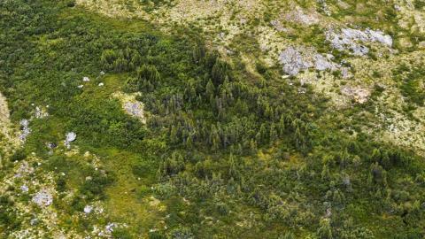 Greening - 1.jpg