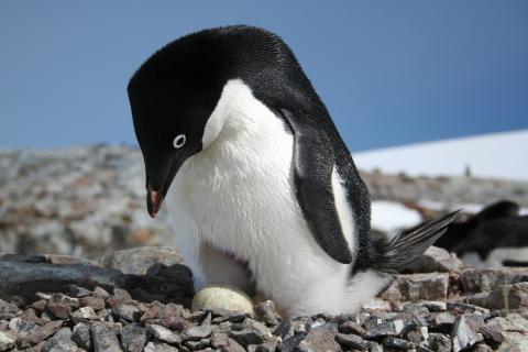 Penguins - 2.jpeg