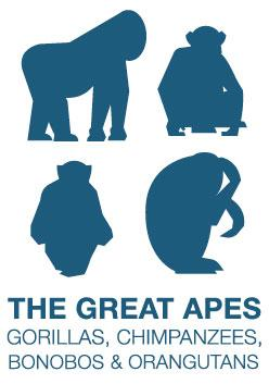 The Great Apes illustration of a gorilla, chimpanzees, bonobos and orangutans