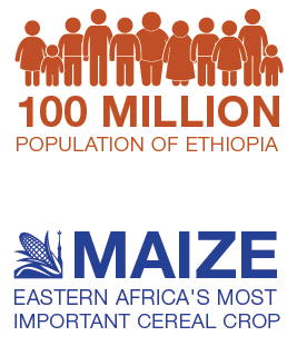 Population of Ethiopia is 100 million. Maize is eastern Africa's most important cereal crop.