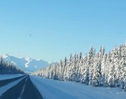 Snow covered trees in Tok, Alaska