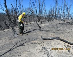 Photo of man in forest with bare trees after a wildfire