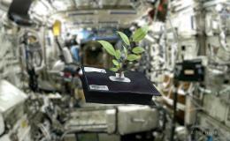Space Gardening Poster