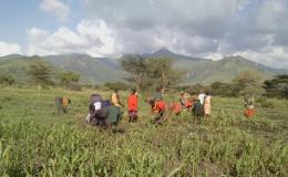 Photo of farmers working fields