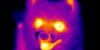 infrared-thumb.png