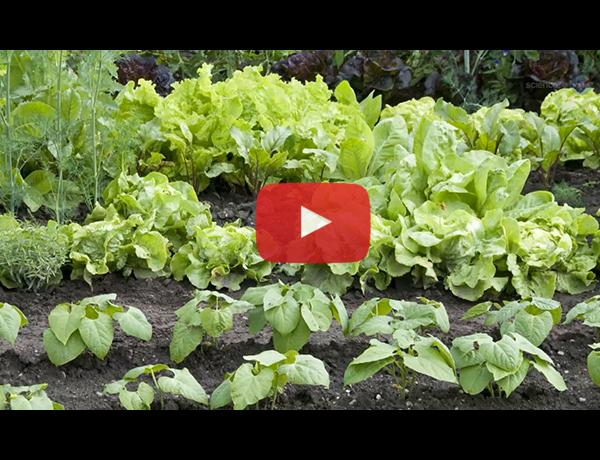 ScienceCasts: Lettuce Orbit Earth - A New Form of Life Takes Root on the ISS